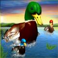 真正的鸭子3D